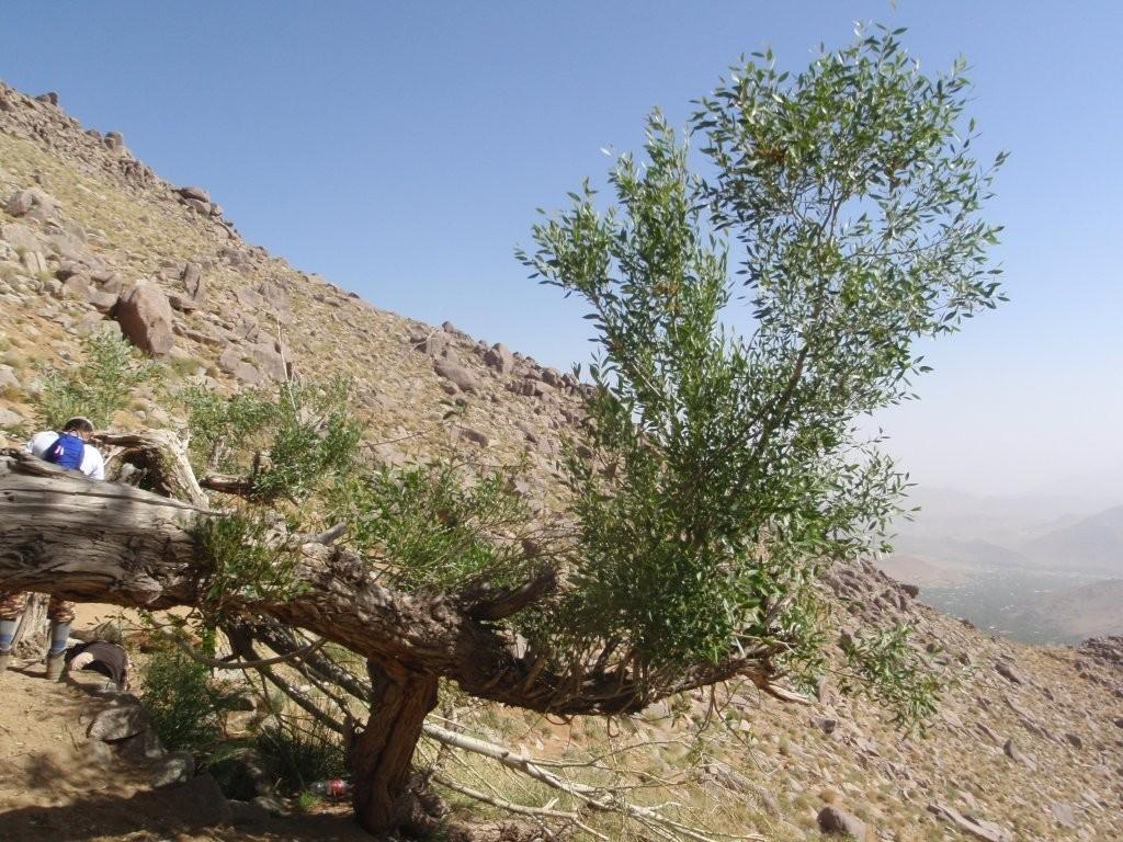 چشمه ای در مسیر صعود به قله